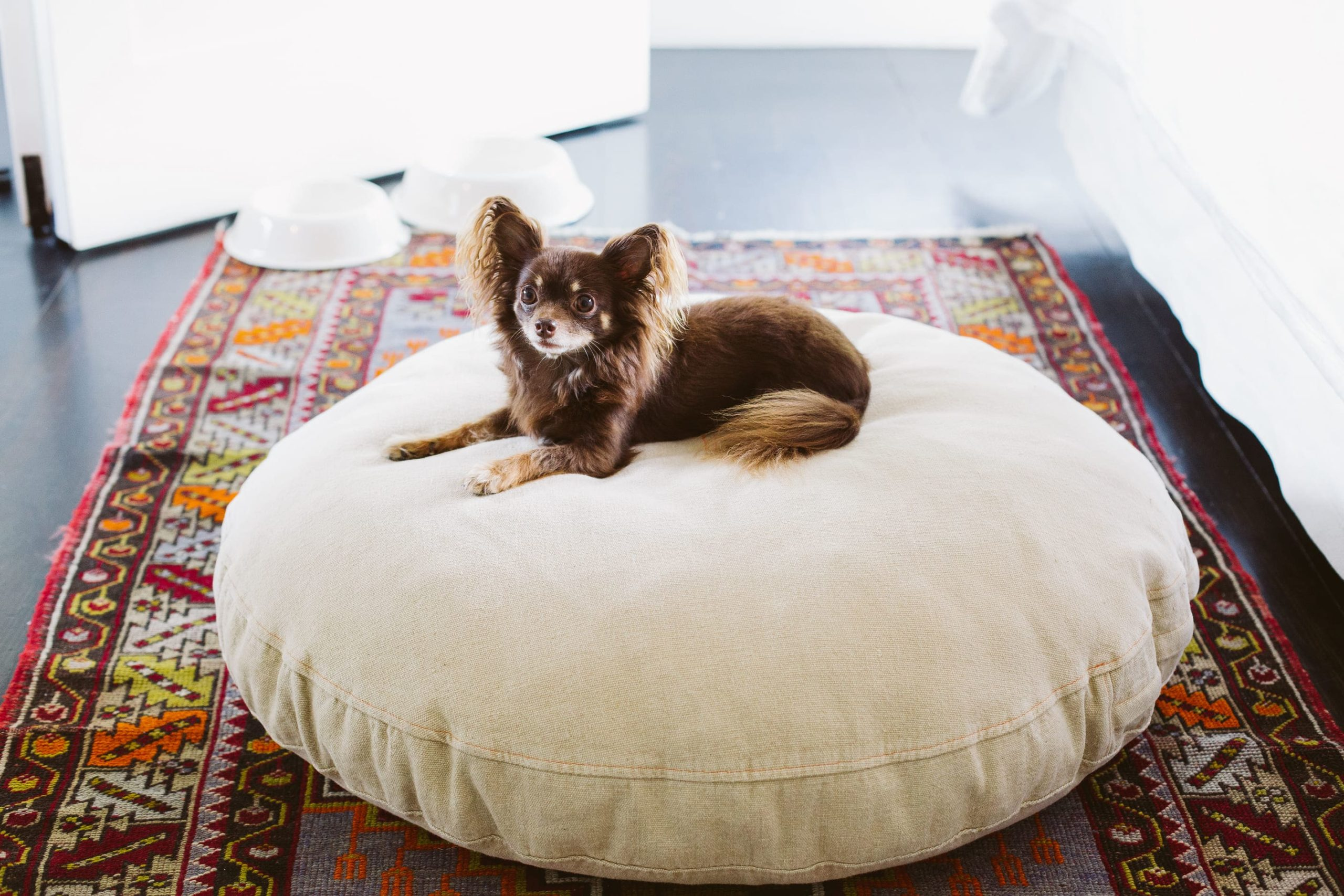 Small dog sitting on a dog-bed